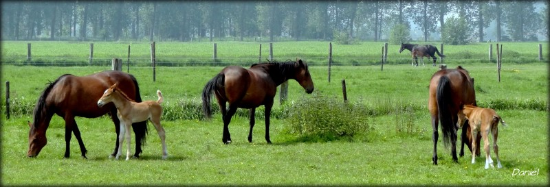 horses-800-x-273.jpg