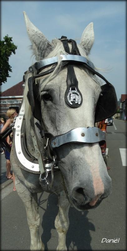 paard-407-x-800.jpg